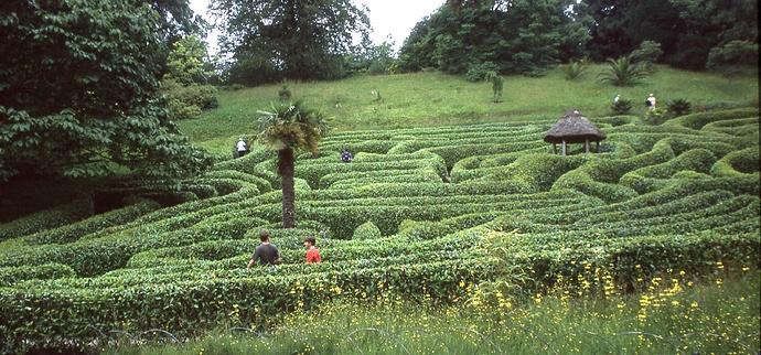 Glendurgan-Maze1-cTLamb