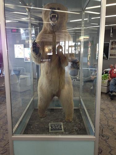 kenai-airport-bear