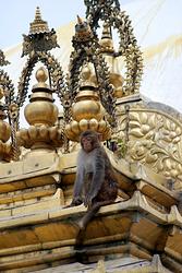 Tibet-Nepal-2018-PHOTOS-Tele%20299-Nepal-Kathmandu-Swayambhunath(Monkey)Temple